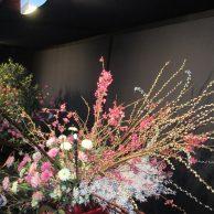 festival-japao 09